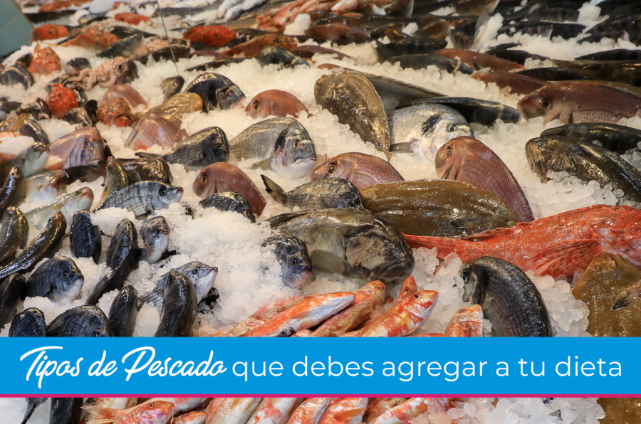 Tipos de Pescado que debes agregar a tu dieta | Parte 1