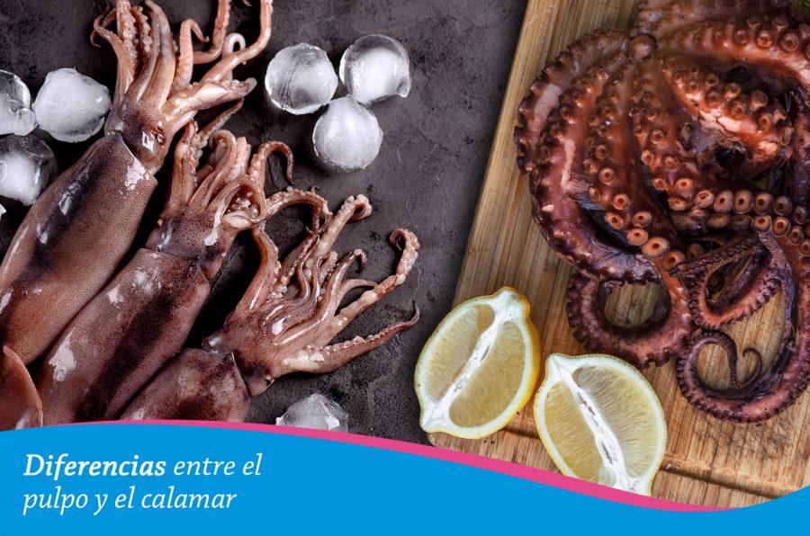 Diferencias entre el pulpo y el calamar